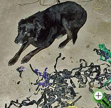 Dog Tape