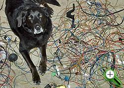 Dog Wire