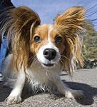 Super Ears